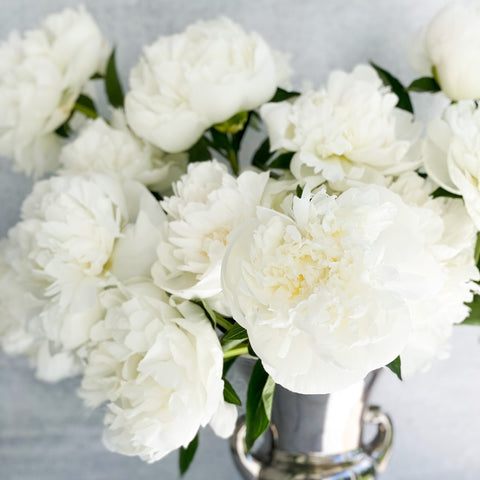 Winter White Peonies for the Holidays