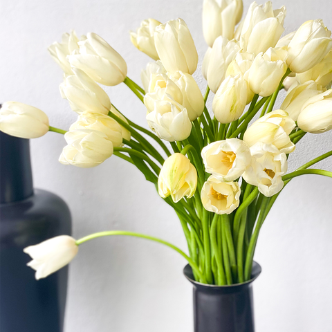 French Tulips in White - 50 Stems