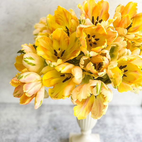Apricot Parrot Tulips - March 2021 - Invited Blooms
