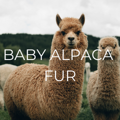 Baby Alpaca fur is one of our sustainable resources.