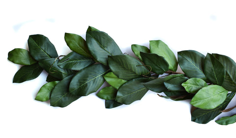 6' Mountain Magnolia Garland - Living Roots Decor