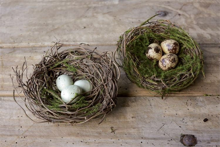 Nest with Eggs - Living Roots Decor