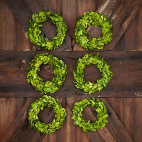 "6"" Preserved Boxwood Wreath - Living Roots Decor"