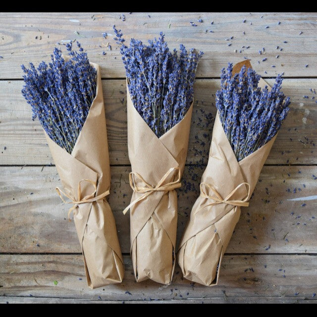 French Lavender in Kraft Paper - Living Roots Decor