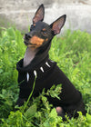 - Retired Dog/Cat Warrior King Sweaters