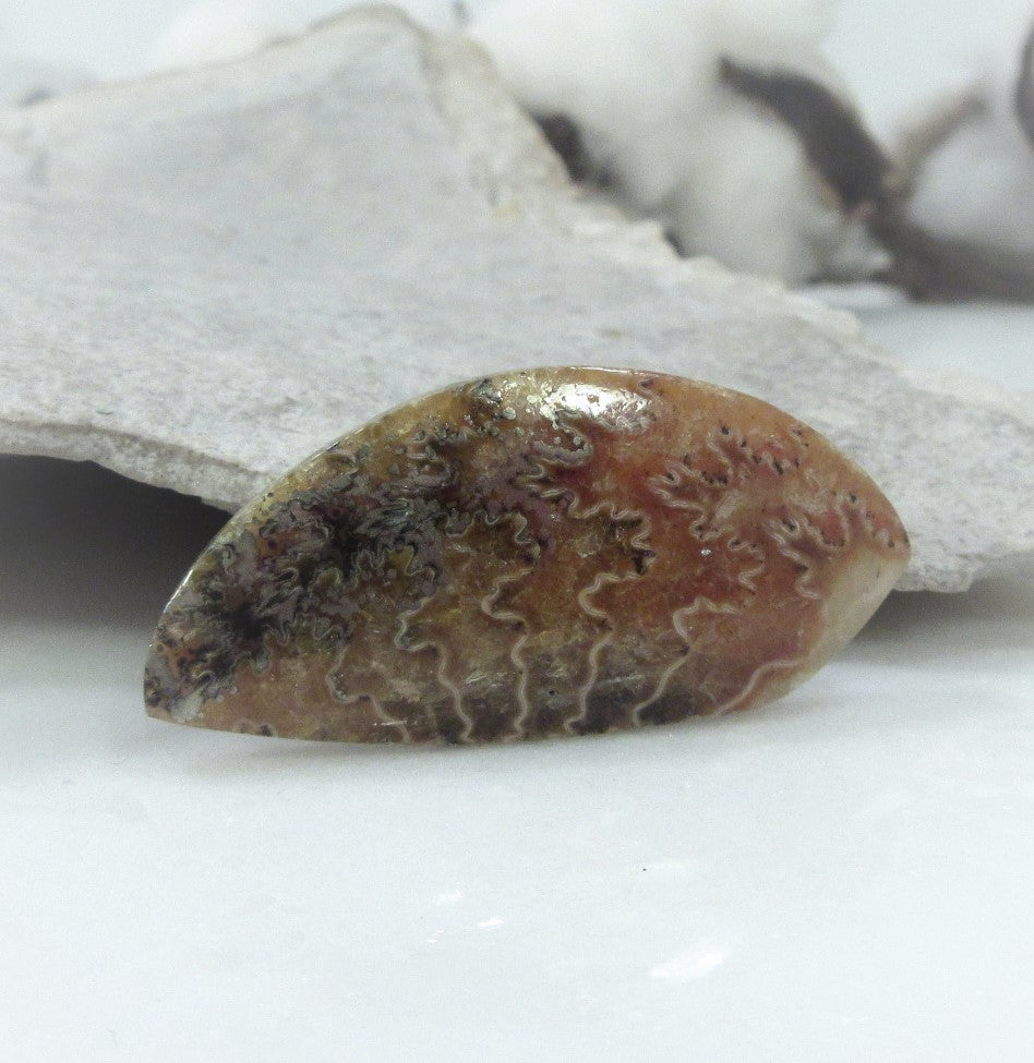 Ammonite Cabochon AM100138185