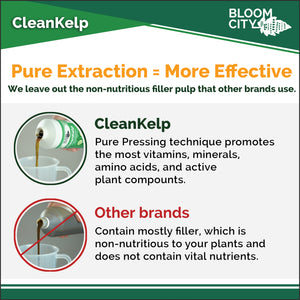 Premium Cold Pressed CleanKelp Growing Supplement
