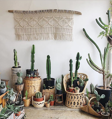 a large white macrame piece hangs over a collection of large cactus and succulents placed in vintage wicker baskets