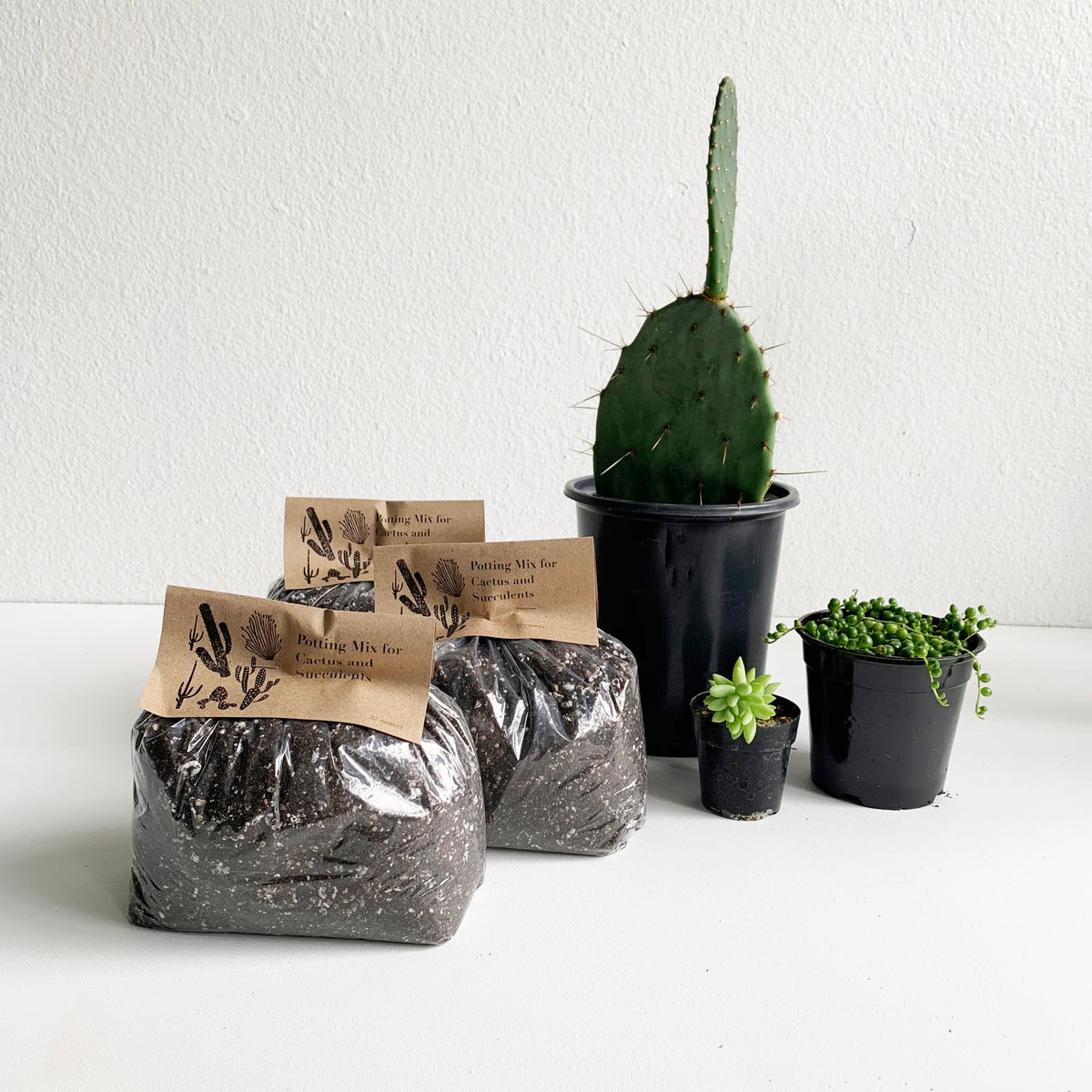 Cactus and Succulent Soil Potting Mix  **LOCAL Delivery or Pick-up Only**