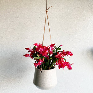 "5.5"" Off White Domed Bottom Ceramic Hanging Planter"