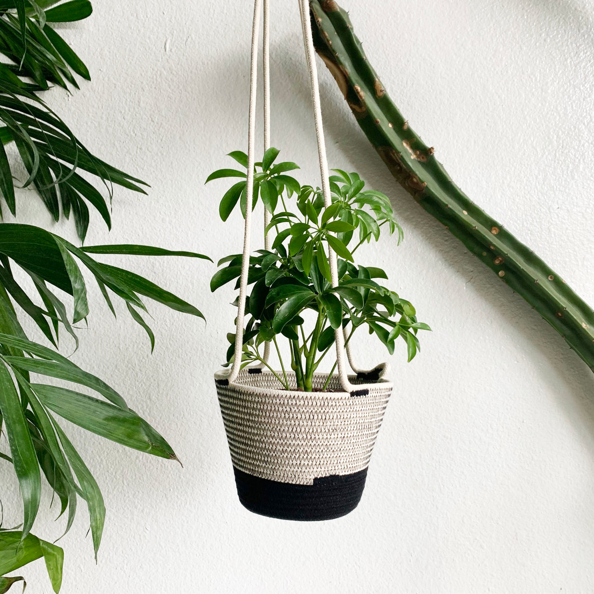 Small Hanging Planter - Liquorice