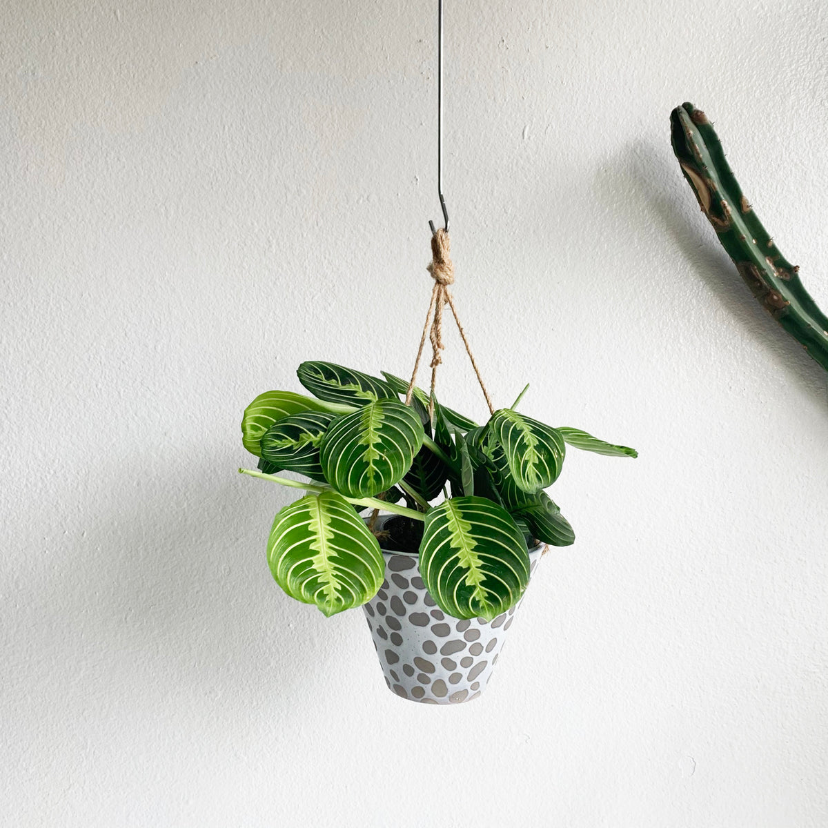 "8"" Hanging Pot with Pebble Pattern"
