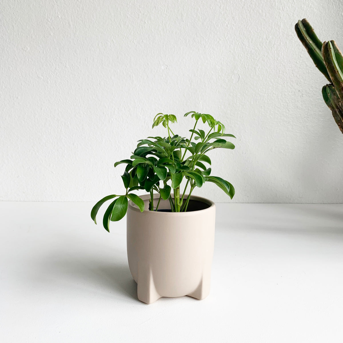 "5"" Modern Footed Planter in a Beige Matte Glaze"