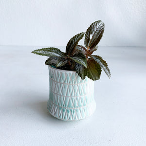 "Fremont Mint Pot 3"" LOCAL delivery or Pick-up only"