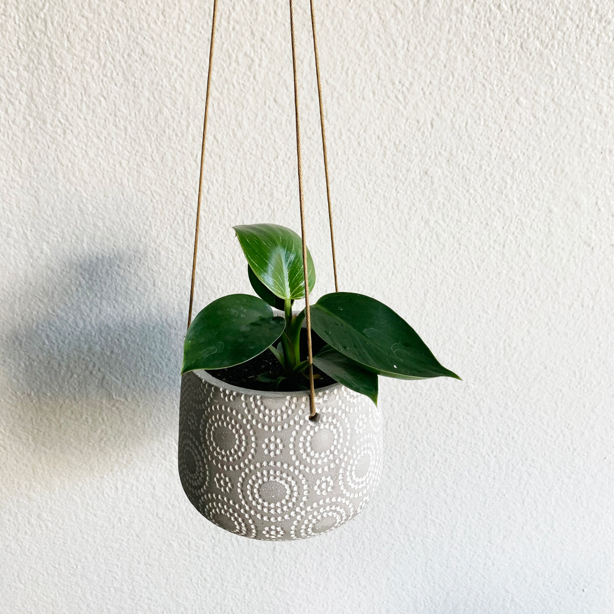 "6"" Pot/Planter-hanging concrete with swirling dots"