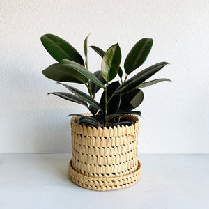 Natural Basket with Lid