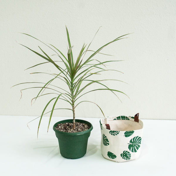 Large Fabric Bucket—Monstera Leaf Print