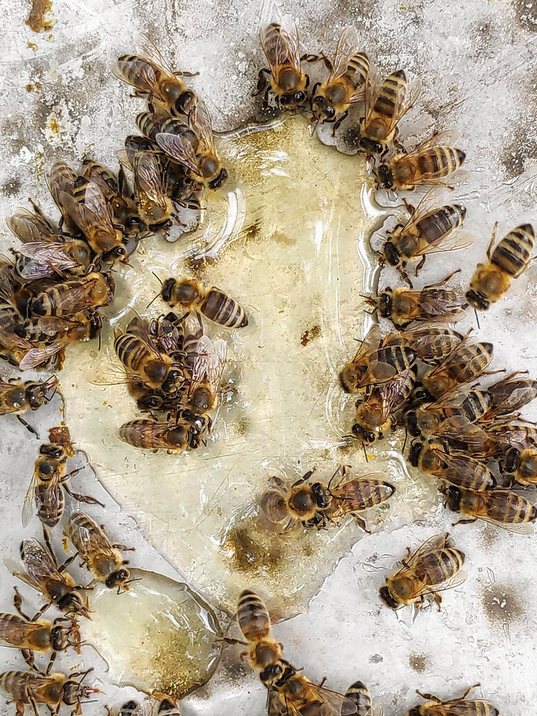 How likely is it to be attacked by a swarm of bees?
