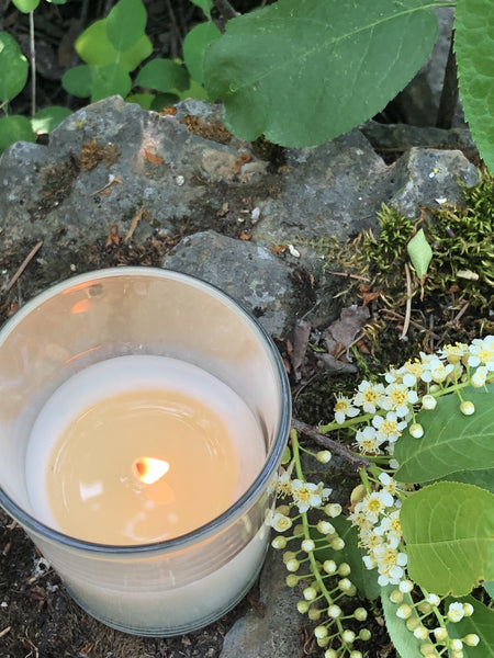 7 oz. Wild Mountain Honey soy candle in boutique glass jar