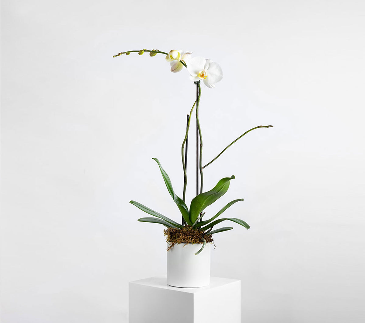 orchids plants flowers melbourne Richmond delivery