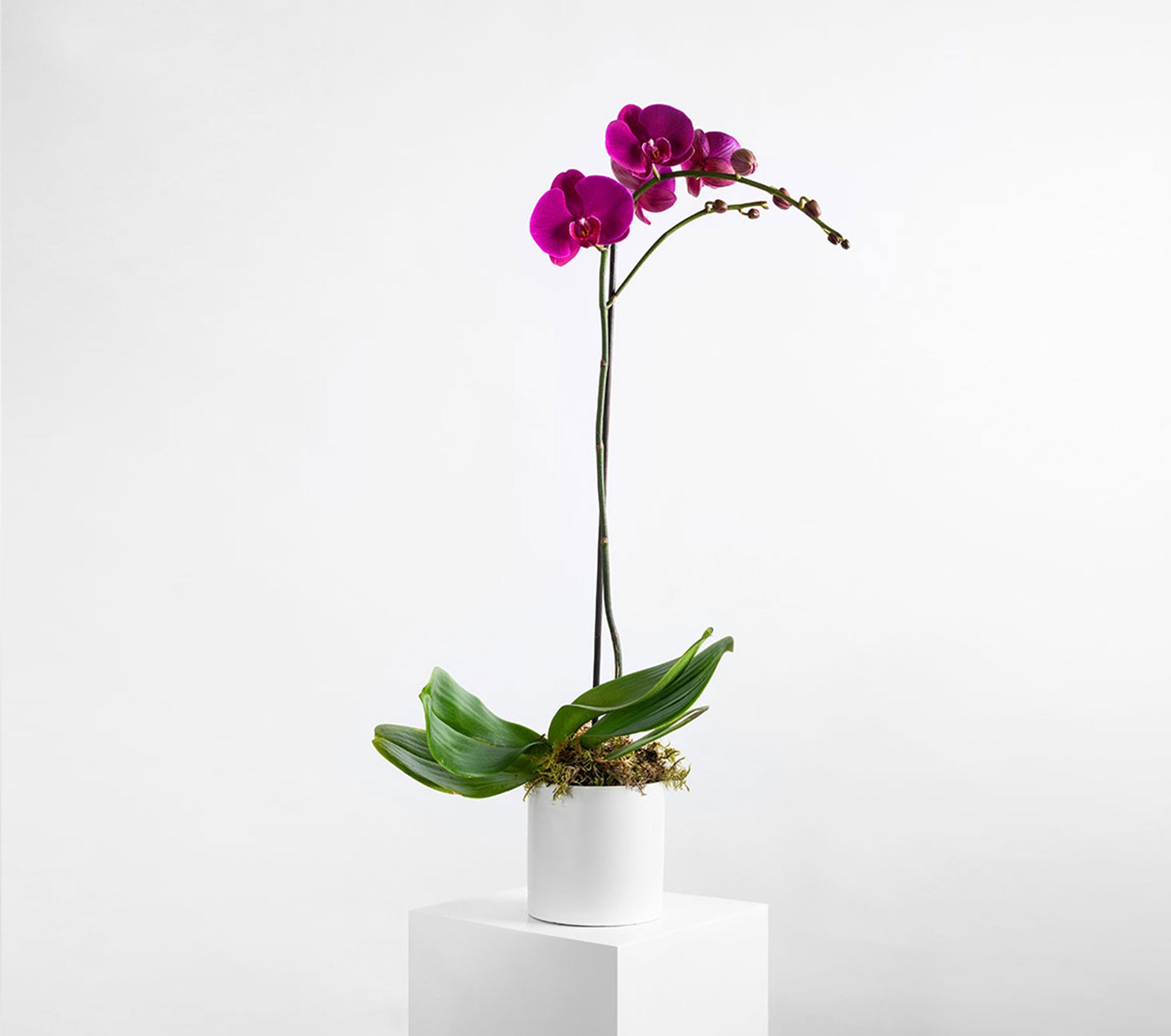 flowers orchids delivery richmond melbourne