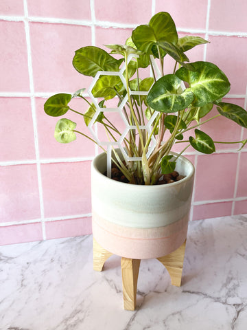 Honeycomb Plant Climber - Small ~ choose colour