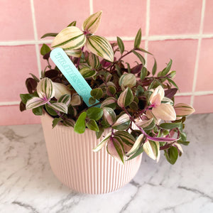 Plant Markers ~ Pretty Pastels