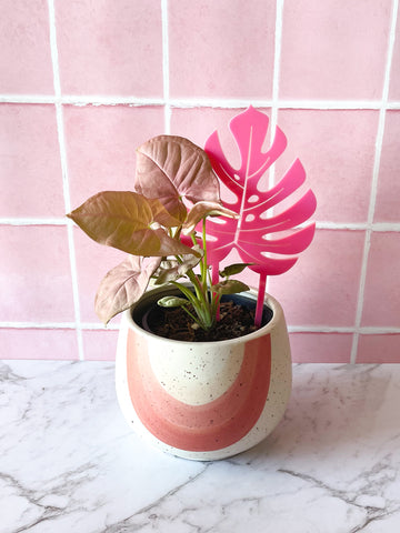 Monstera Plant Climber - Small ~ choose colour