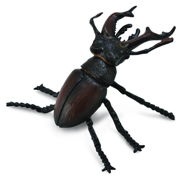 Boris the Stag Beetle