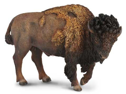 Asher the American Bison