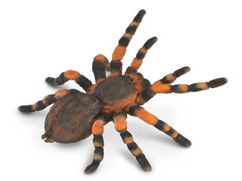 Tim the Tarantula
