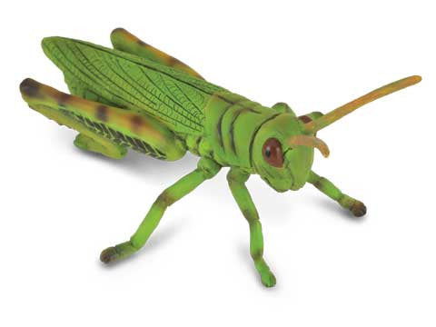 Gilbert the Grasshopper