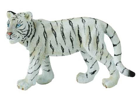 White Tiger Cub - Walking