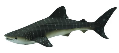 Warren the Whale Shark