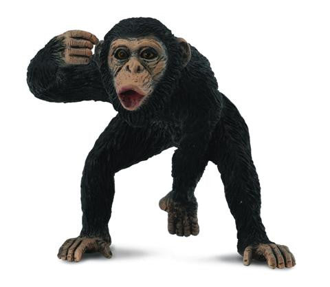 Charlie the Chimpanzee (Male)