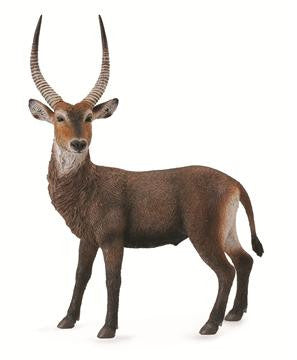 Wes the Waterbuck