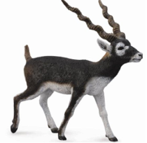 Briar the Blackbuck