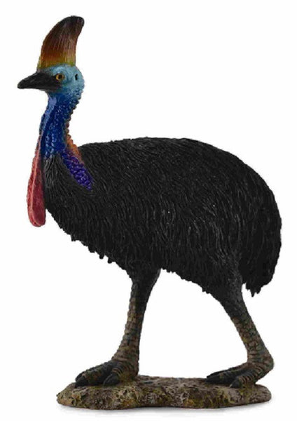 Cassy the Cassowary