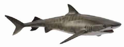 Terrance the Tiger Shark