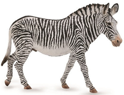 Gary the Grevy's Zebra