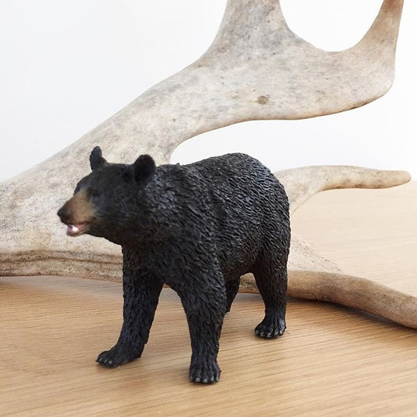 Bowie the Black Bear