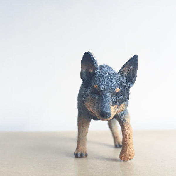 Bluey the Australian Cattle Dog