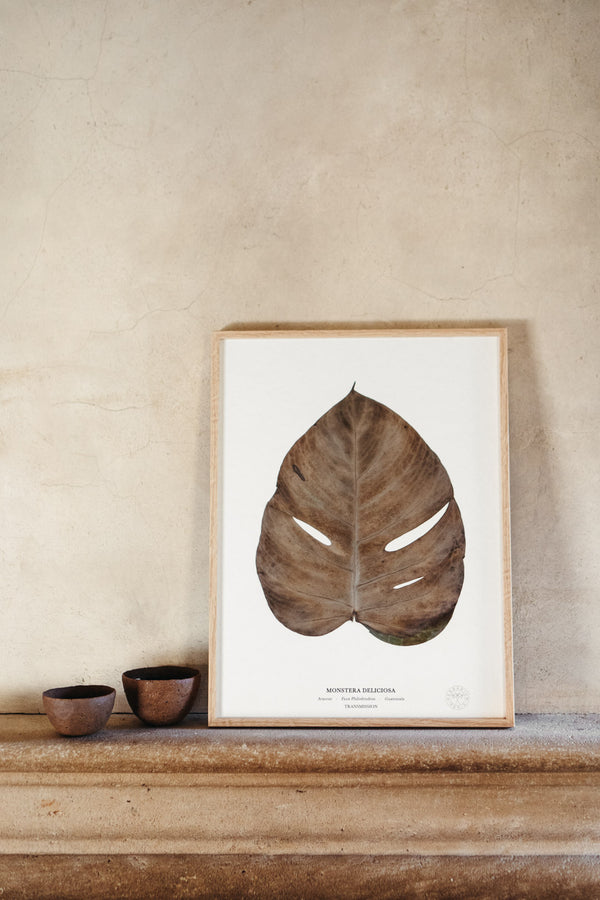 Faux Philodendron<br>Transmission