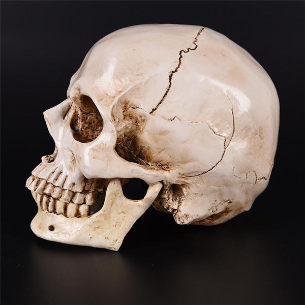 Human Head Resin Decorative Craft Skull