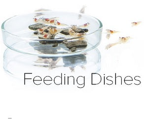 Shrimp Feeding Dish