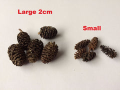 Large Black Alder Cones (20pcs)