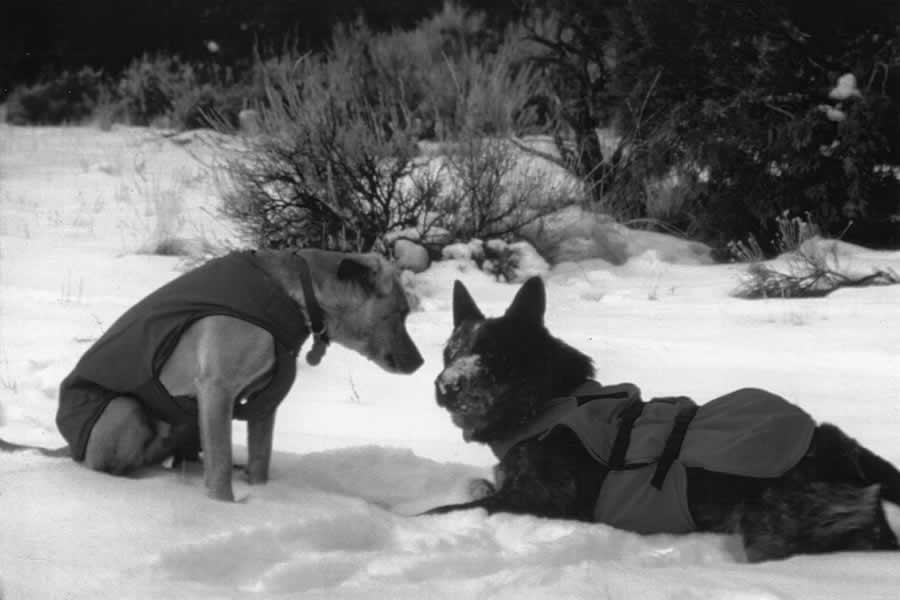 initial k-9 overcoat on two dogs in 1998 black & white.