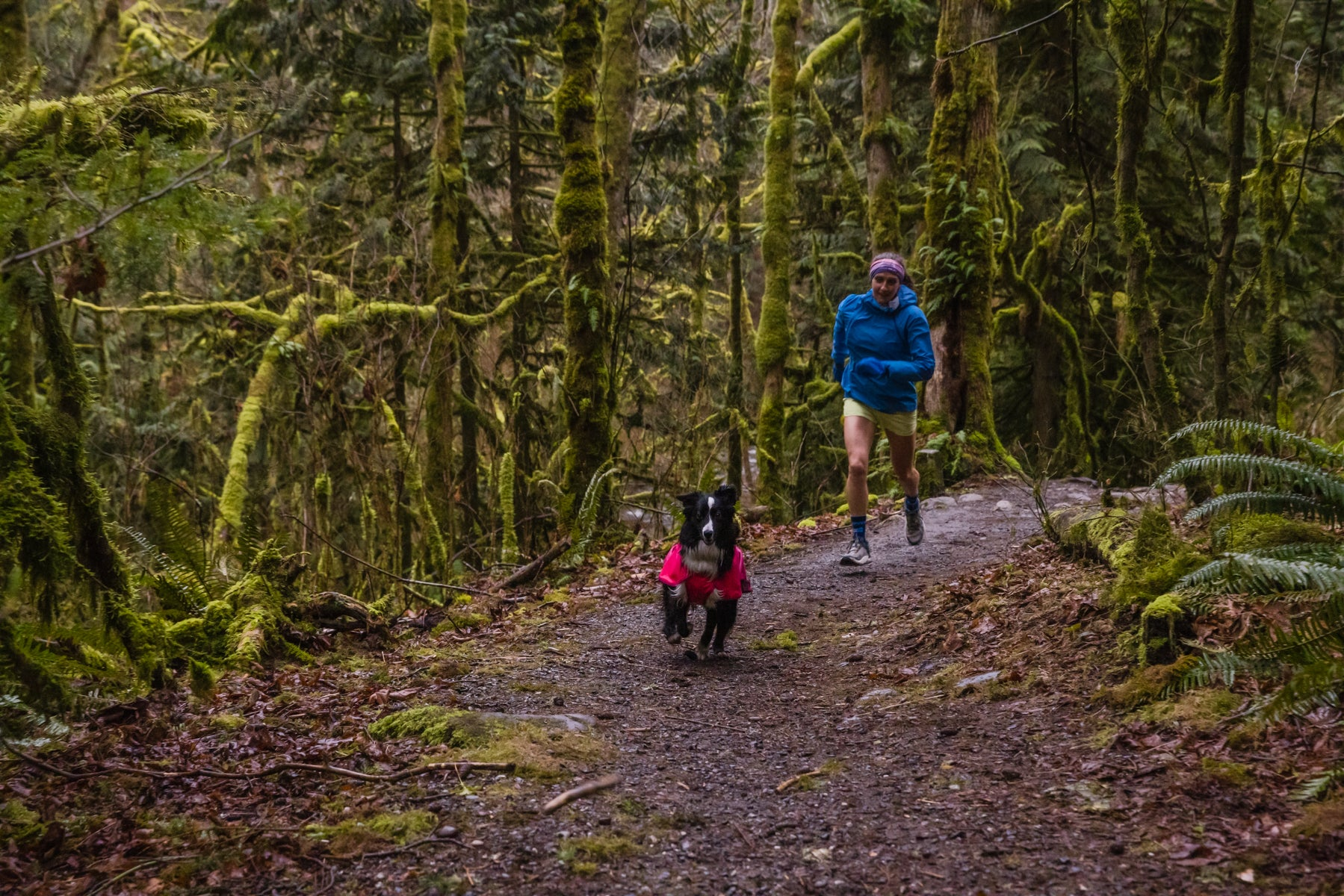 Krissy and PD run in a dense, green forest on a rainy day