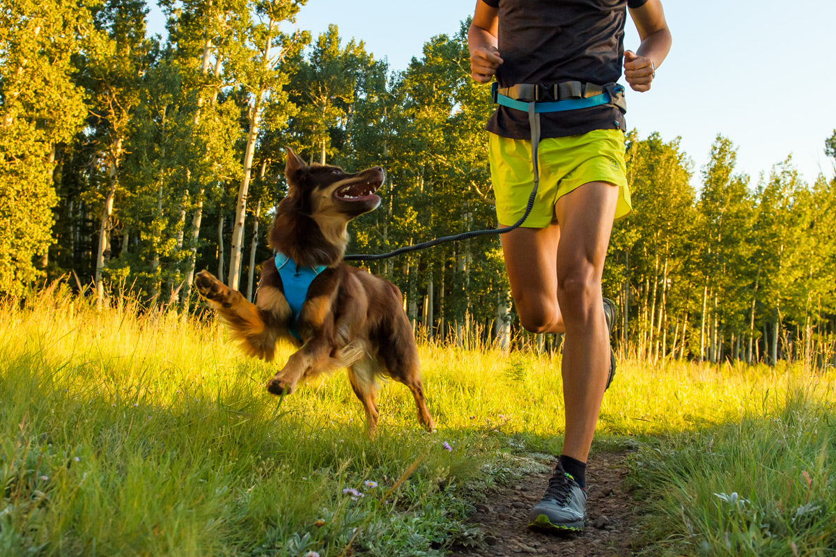 Nico in trail runner belt with Sol in front range harness out for a trail run at sunset.