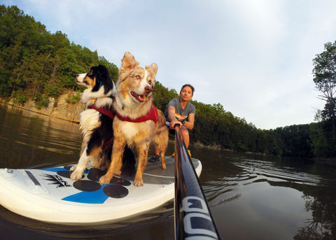 Maria paddleboarding with her two dogs